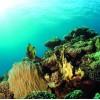 Scrapvel koraal