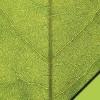 Scrapvel blad groen