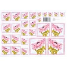 Knipvel Marjoleine anemonen roze