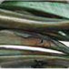 Hoorn groen